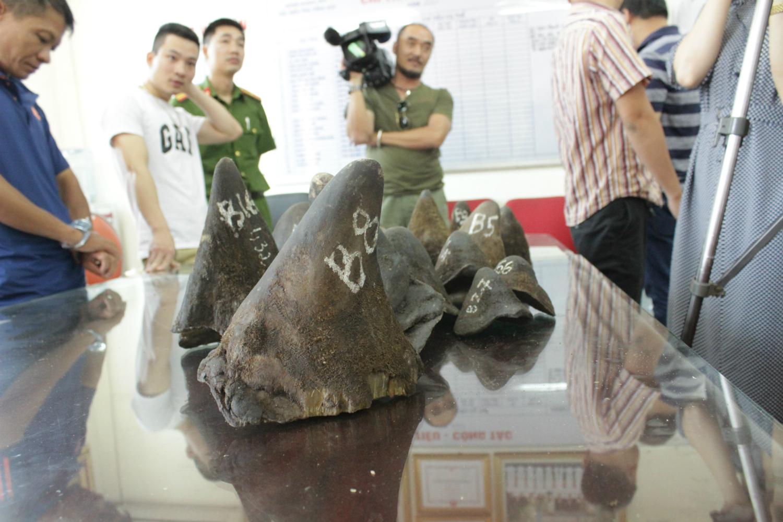 Rhino horn bust in Hanoi, Vietnam