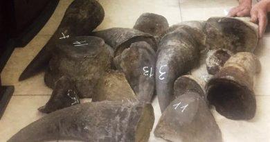 Rhino horn seizure in Nguyen Mau Chien smuggling case in Hanoi, Vietnam