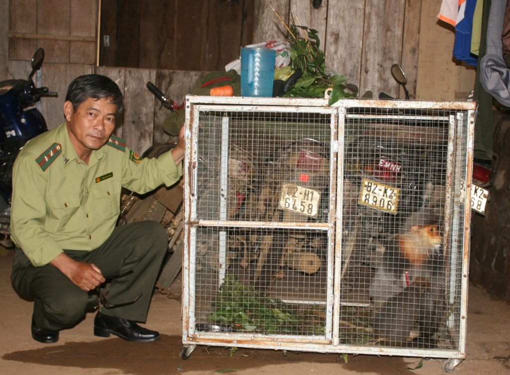 caged langurs in Kon Tum, Vietnam being rescued by local Forest Protection Department officer