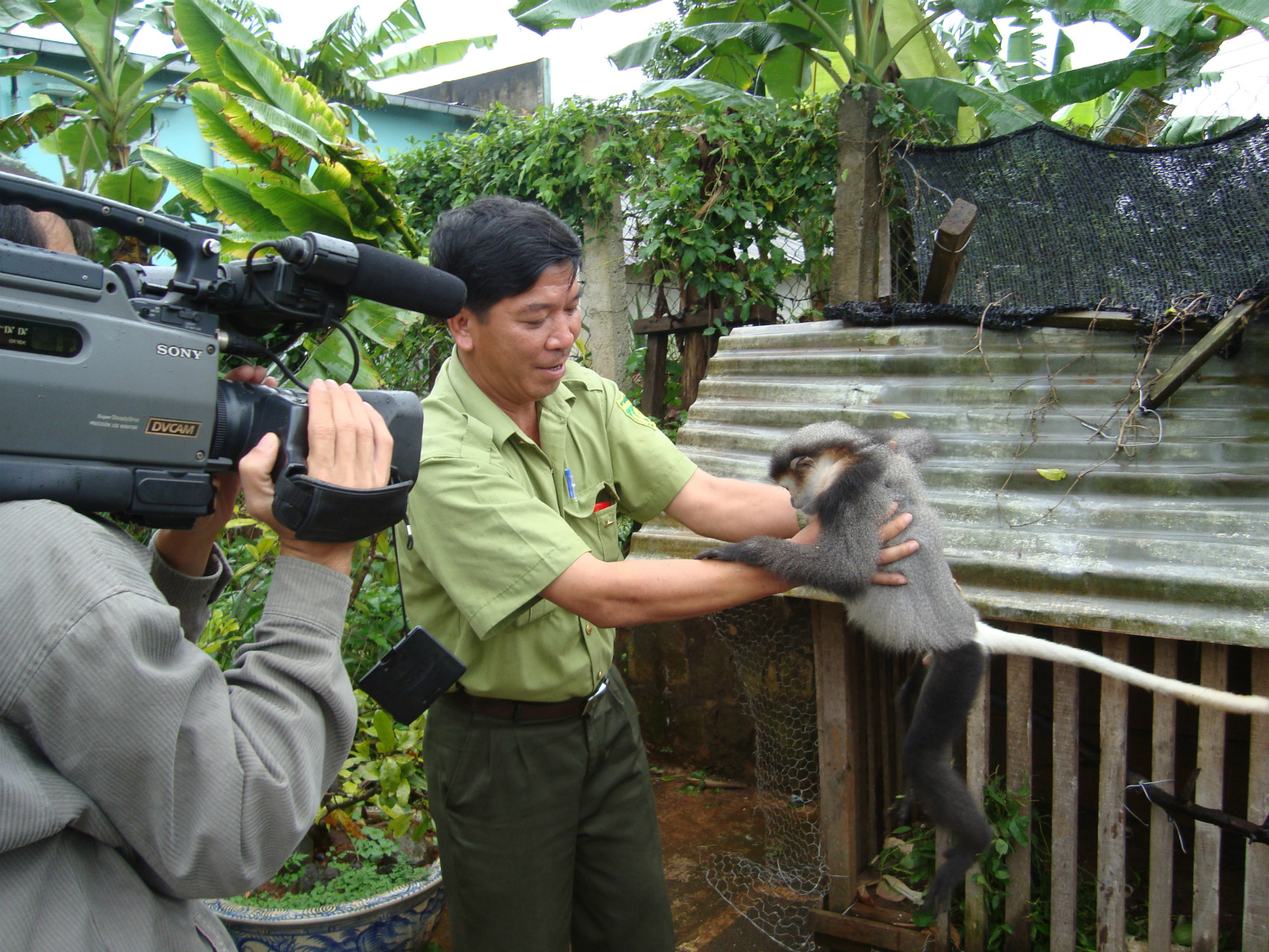 Langur rescue being filmed by TV news