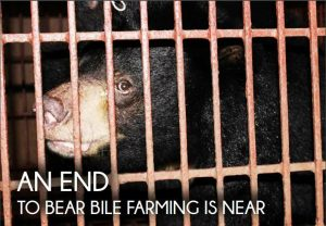 bile bear in a cage