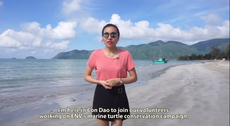 Saving marine turtles in Vietnam