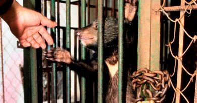 Bear farm, Vietnam