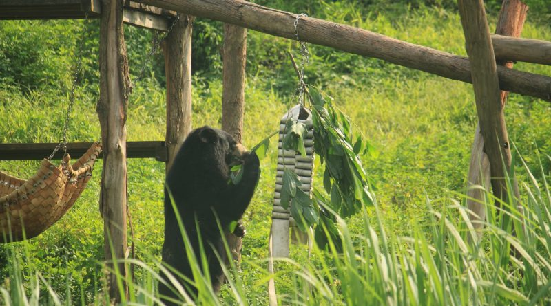 Bear at a rescue center in Vietnam
